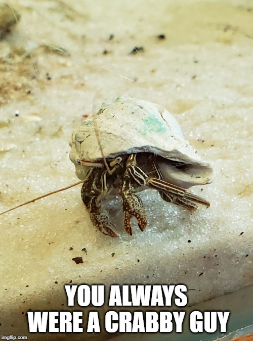 Hermit crab | YOU ALWAYS WERE A CRABBY GUY | image tagged in hermit crab | made w/ Imgflip meme maker
