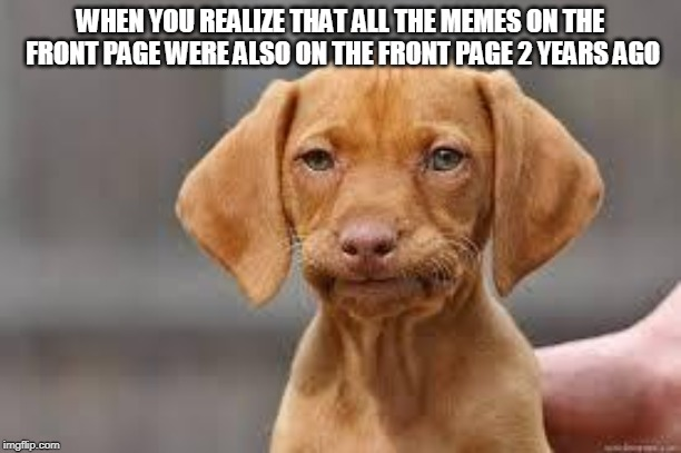Disappointed Dog | WHEN YOU REALIZE THAT ALL THE MEMES ON THE FRONT PAGE WERE ALSO ON THE FRONT PAGE 2 YEARS AGO | image tagged in disappointed dog | made w/ Imgflip meme maker