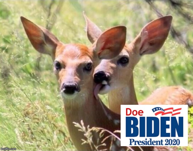 A better candidate than Uncle Joe | image tagged in joe biden,election 2020,doe | made w/ Imgflip meme maker