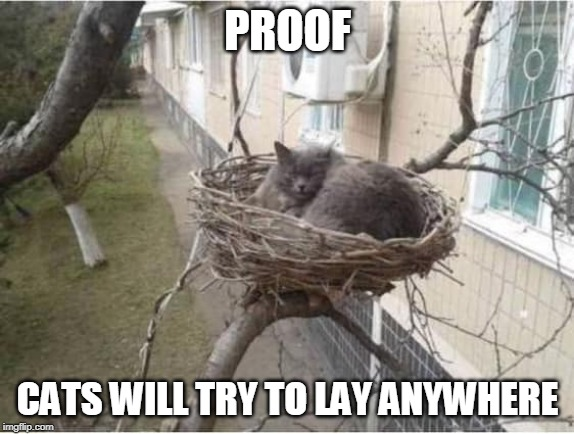 BIRD? | PROOF CATS WILL TRY TO LAY ANYWHERE | image tagged in cat nest,cats,cat,funny | made w/ Imgflip meme maker