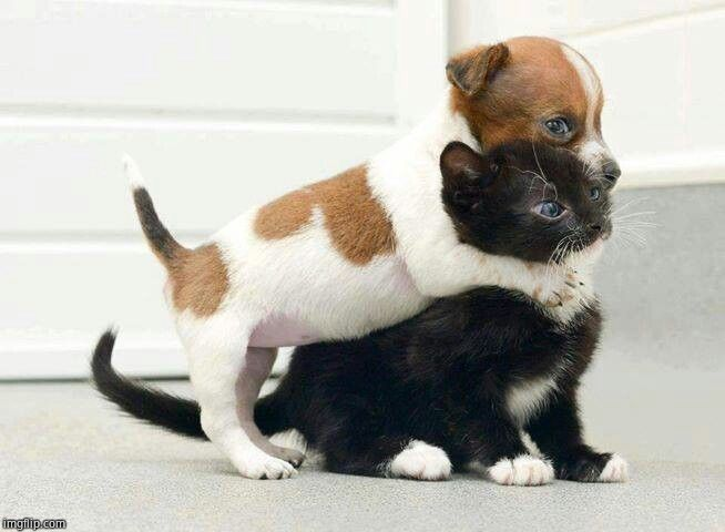 Dog Hugging Cat | image tagged in dog hugging cat | made w/ Imgflip meme maker