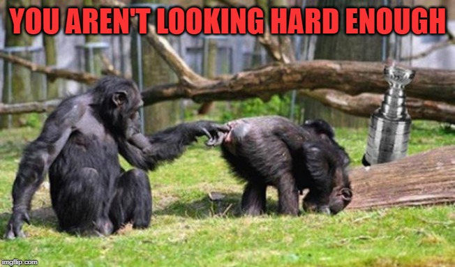 Monkeys | YOU AREN'T LOOKING HARD ENOUGH | image tagged in monkeys | made w/ Imgflip meme maker