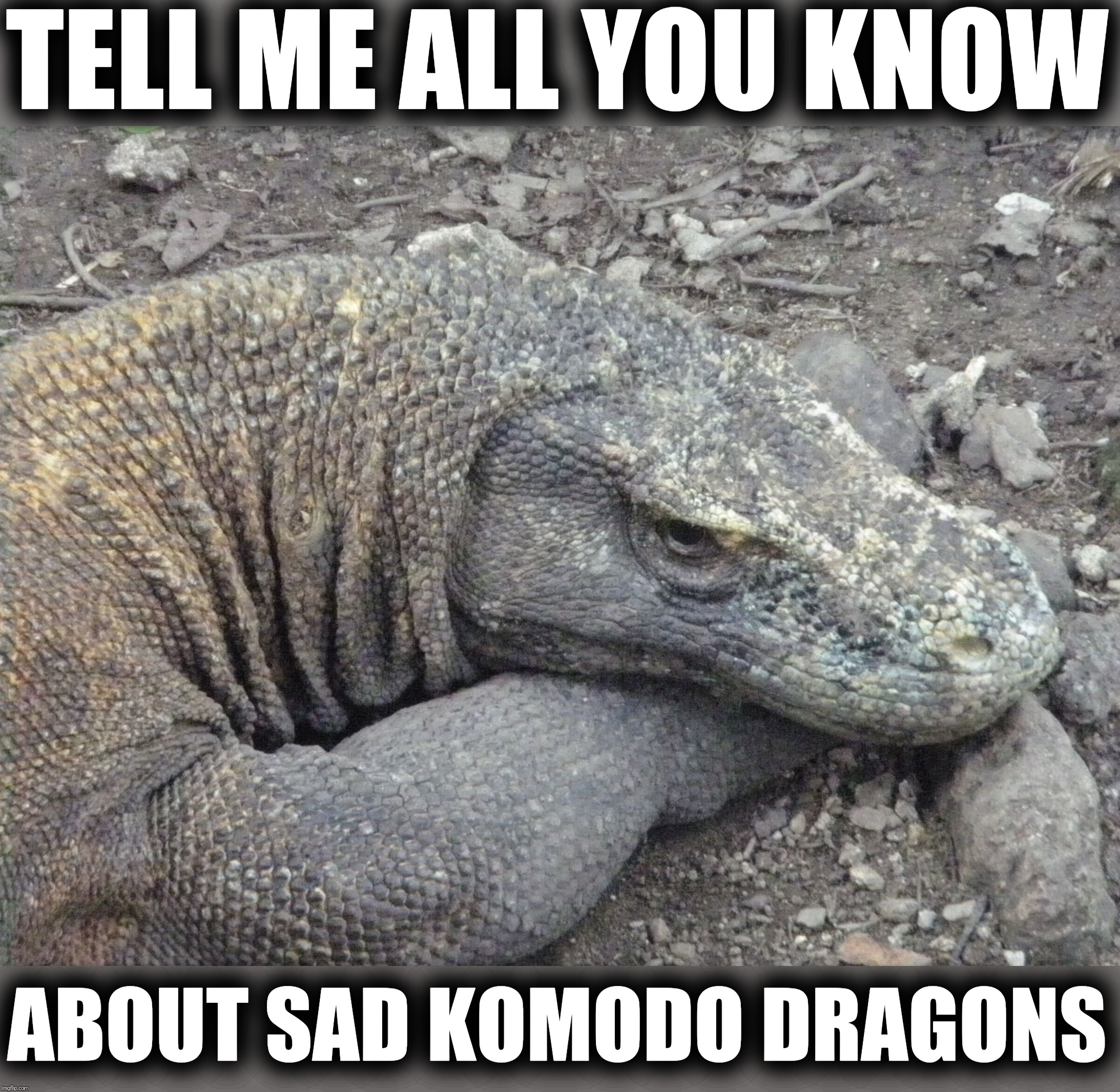 Sad Komodo Dragon is sad |  TELL ME ALL YOU KNOW; ABOUT SAD KOMODO DRAGONS | image tagged in sad komodo dragon,komodo dragon | made w/ Imgflip meme maker