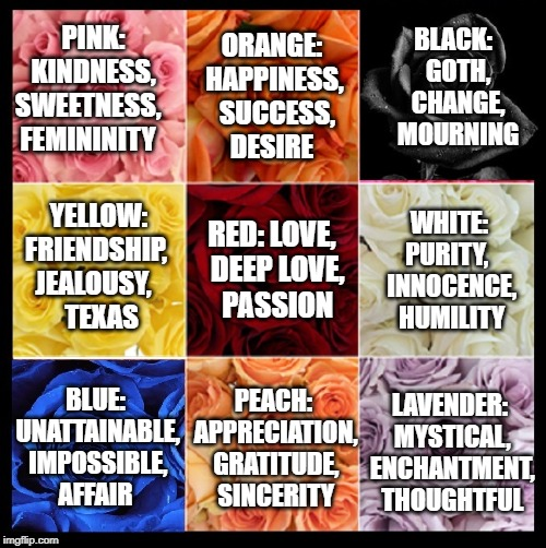 Vince's Color of the Rose and their Meaning |  BLACK:  GOTH,  CHANGE,  MOURNING; ORANGE: HAPPINESS,  SUCCESS,  DESIRE; PINK: KINDNESS,  SWEETNESS,     FEMININITY; WHITE: PURITY,   INNOCENCE,   HUMILITY; RED: LOVE,  DEEP LOVE,    PASSION; YELLOW: FRIENDSHIP,   JEALOUSY,         TEXAS; LAVENDER: MYSTICAL, ENCHANTMENT, THOUGHTFUL; PEACH: APPRECIATION, GRATITUDE, SINCERITY; BLUE: UNATTAINABLE, IMPOSSIBLE,  AFFAIR | image tagged in vince vance,meaning,color,roses are red violets are are blue,flowers,love | made w/ Imgflip meme maker