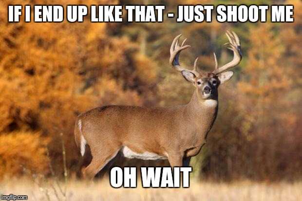 whitetail deer | IF I END UP LIKE THAT - JUST SHOOT ME OH WAIT | image tagged in whitetail deer | made w/ Imgflip meme maker