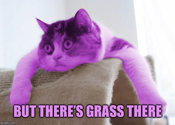 RayCat Stare | BUT THERE'S GRASS THERE | image tagged in raycat stare | made w/ Imgflip meme maker