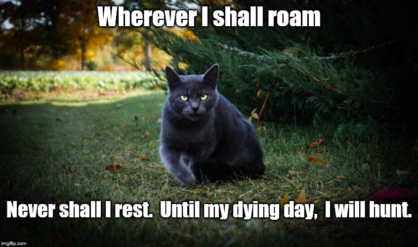 Wherever I shall roam | Wherever I shall roam Never shall I rest.  Until my dying day,  I will hunt. | image tagged in cat,hunting,motivation | made w/ Imgflip meme maker