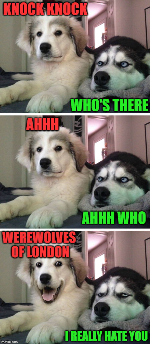 Really bad joke | KNOCK KNOCK WHO'S THERE AHHH AHHH WHO WEREWOLVES OF LONDON I REALLY HATE YOU | image tagged in bad pun dogs,terrible,bad joke dog | made w/ Imgflip meme maker