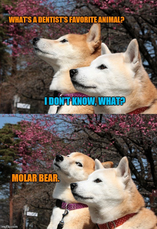 Bad pun dogs | WHAT'S A DENTIST'S FAVORITE ANIMAL? I DON'T KNOW, WHAT? MOLAR BEAR. | image tagged in bad pun dogs,clean humor | made w/ Imgflip meme maker