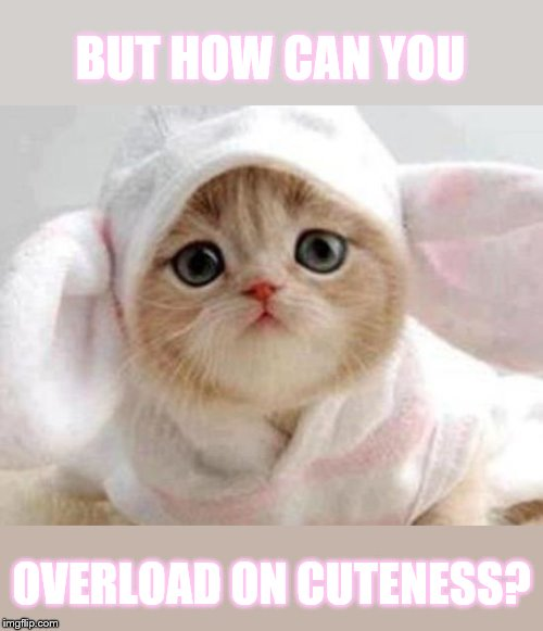 BUT HOW CAN YOU OVERLOAD ON CUTENESS? | made w/ Imgflip meme maker
