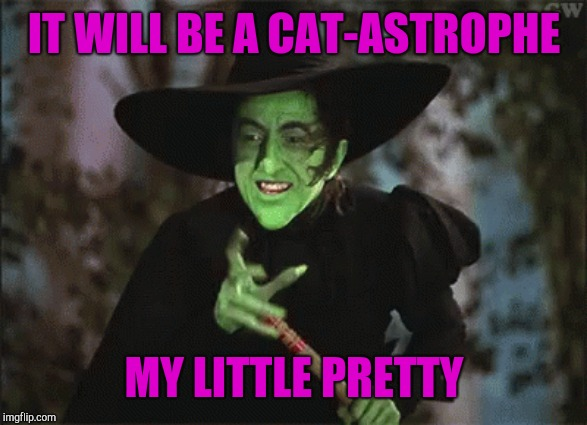 IT WILL BE A CAT-ASTROPHE MY LITTLE PRETTY | made w/ Imgflip meme maker