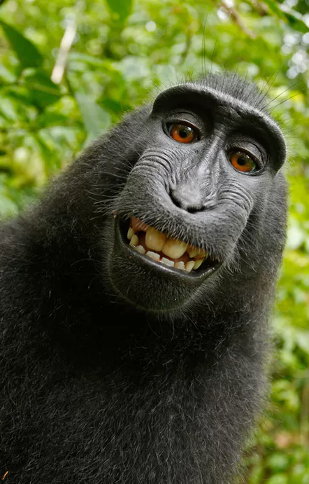 High Quality Monkey Smile Blank Meme Template