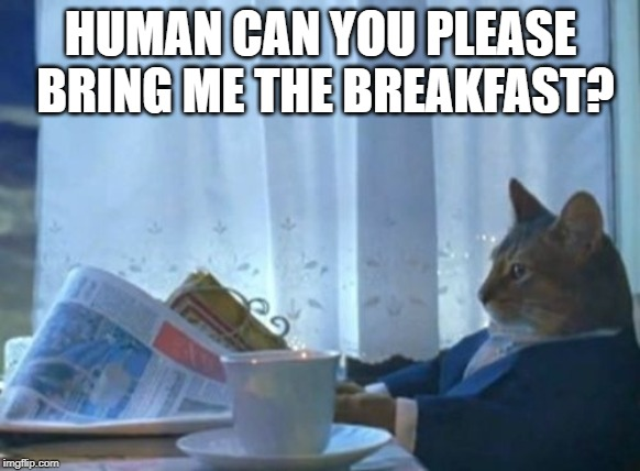 I Should Buy A Boat Cat Meme | HUMAN CAN YOU PLEASE BRING ME THE BREAKFAST? | image tagged in memes,i should buy a boat cat | made w/ Imgflip meme maker