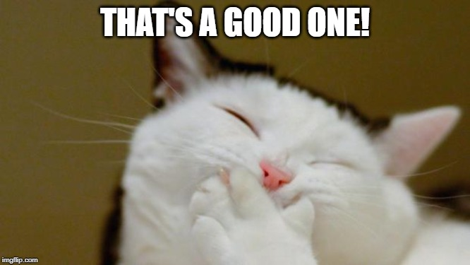 Laughing Cat | THAT'S A GOOD ONE! | image tagged in laughing cat | made w/ Imgflip meme maker