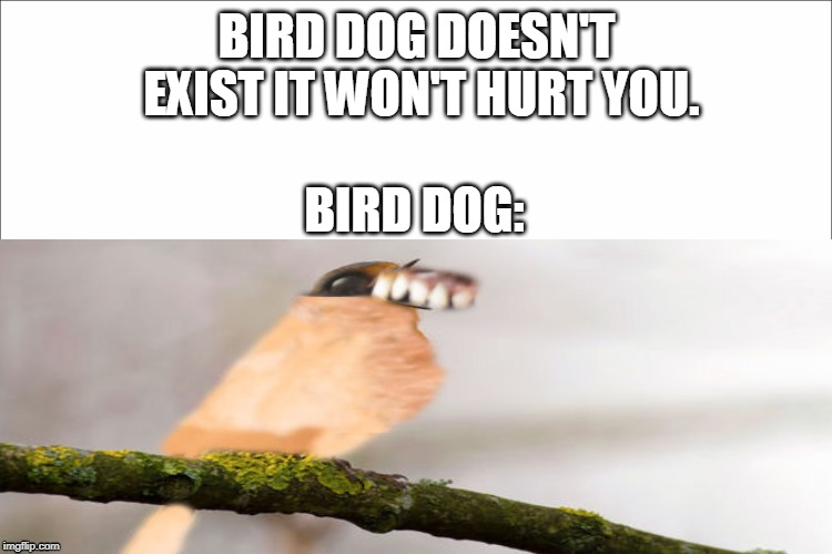 Pls Send help | BIRD DOG DOESN'T EXIST IT WON'T HURT YOU. BIRD DOG: | image tagged in memes | made w/ Imgflip meme maker