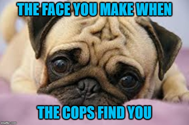 Why did i make this? | THE FACE YOU MAKE WHEN THE COPS FIND YOU | image tagged in pugs | made w/ Imgflip meme maker