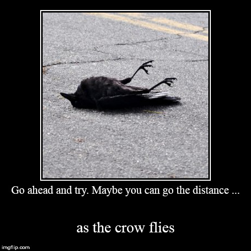 As the Crow Flies | Go ahead and try. Maybe you can go the distance ... | as the crow flies | image tagged in funny,demotivationals,positive thinking,self esteem,hope and change | made w/ Imgflip demotivational maker