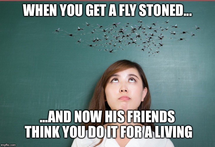 WHEN YOU GET A FLY STONED... ...AND NOW HIS FRIENDS THINK YOU DO IT FOR A LIVING | image tagged in stoner,flies,stoned | made w/ Imgflip meme maker
