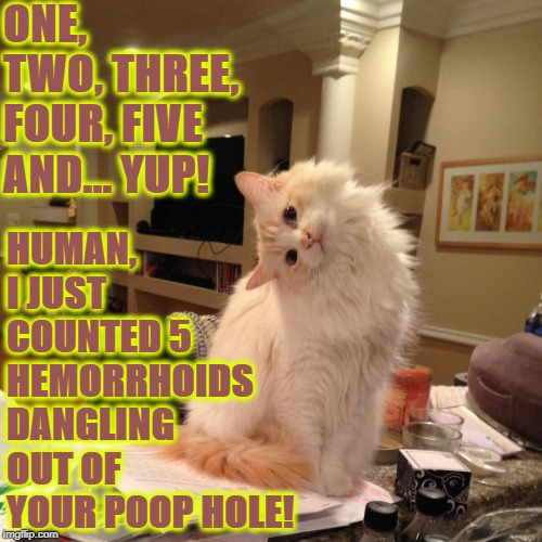 ONE, TWO, THREE, FOUR, FIVE AND... YUP! HUMAN, I JUST COUNTED 5 HEMORRHOIDS DANGLING OUT OF YOUR POOP HOLE! | image tagged in poop hole | made w/ Imgflip meme maker