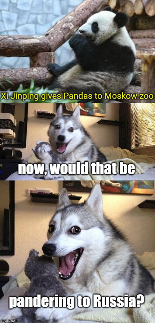 when the news is begging to be memed | Xi Jinping gives Pandas to Moskow zoo now, would that be pandering to Russia? | image tagged in memes,bad pun dog,panda,china,russia | made w/ Imgflip meme maker