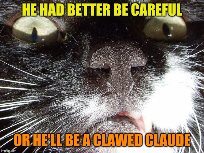 Scary Cat Extreme Closeup | HE HAD BETTER BE CAREFUL OR HE'LL BE A CLAWED CLAUDE | image tagged in scary cat extreme closeup | made w/ Imgflip meme maker