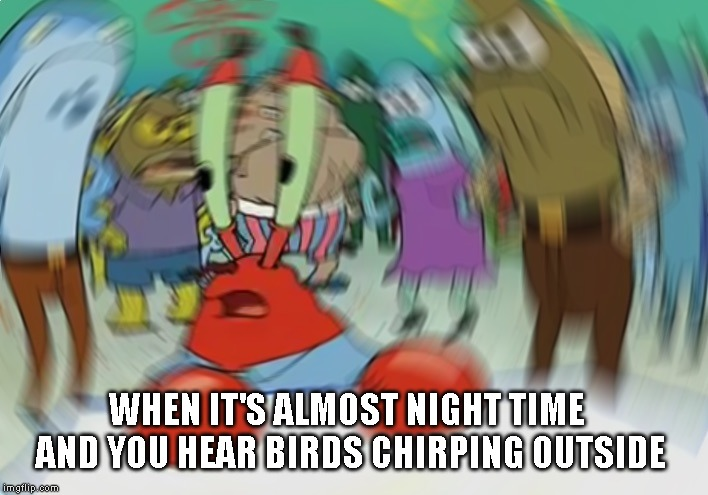 Mr Krabs Blur Meme | WHEN IT'S ALMOST NIGHT TIME AND YOU HEAR BIRDS CHIRPING OUTSIDE | image tagged in memes,mr krabs blur meme,birds,night | made w/ Imgflip meme maker