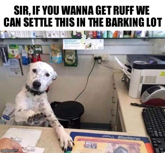 Meet Me In The Barking Lot | SIR, IF YOU WANNA GET RUFF WE CAN SETTLE THIS IN THE BARKING LOT | image tagged in dog,meme | made w/ Imgflip meme maker