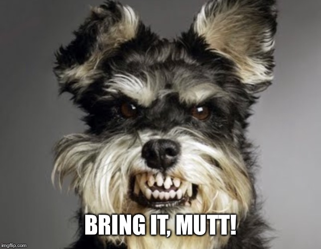 Mean Dog | BRING IT, MUTT! | image tagged in mean dog | made w/ Imgflip meme maker
