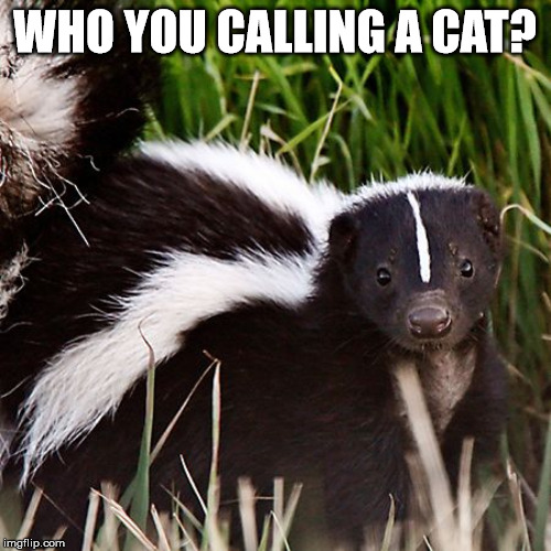 skunk | WHO YOU CALLING A CAT? | image tagged in skunk | made w/ Imgflip meme maker