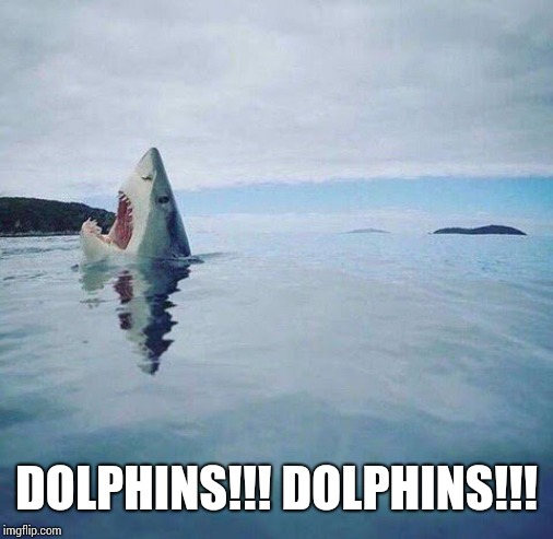 Dolphins kill sharks | DOLPHINS!!! DOLPHINS!!! | image tagged in shark_head_out_of_water | made w/ Imgflip meme maker