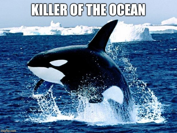 orca | KILLER OF THE OCEAN | image tagged in orca | made w/ Imgflip meme maker