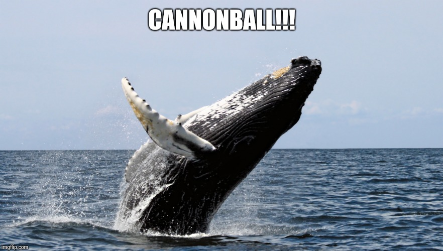 happy whale | CANNONBALL!!! | image tagged in happy whale | made w/ Imgflip meme maker