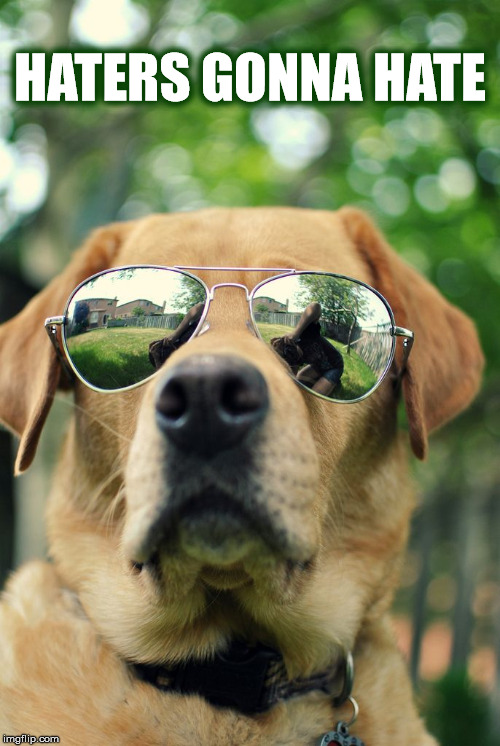 HATERS GONNA HATE | HATERS GONNA HATE | image tagged in haters,haters gonna hate,hate,dog,labrador,sunglasses | made w/ Imgflip meme maker