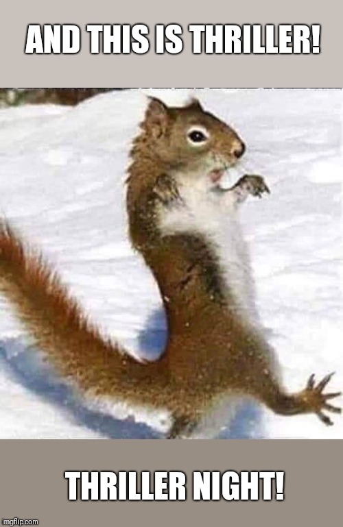Thriller | AND THIS IS THRILLER! THRILLER NIGHT! | image tagged in funny squirrel,thriller,funny thriller night | made w/ Imgflip meme maker