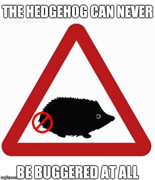 The hedgehog can never be buggered at all | THE HEDGEHOG CAN NEVER BE BUGGERED AT ALL | image tagged in funny,memes,hedgehog | made w/ Imgflip meme maker