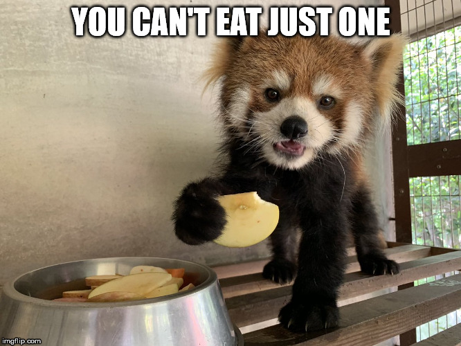 Chips | YOU CAN'T EAT JUST ONE | image tagged in chips,dog,cat,pet,one | made w/ Imgflip meme maker