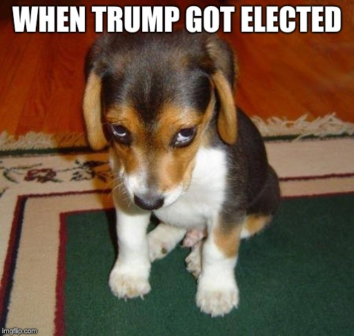 Sad puppy | WHEN TRUMP GOT ELECTED | image tagged in sad puppy,funny memes,donald trump | made w/ Imgflip meme maker