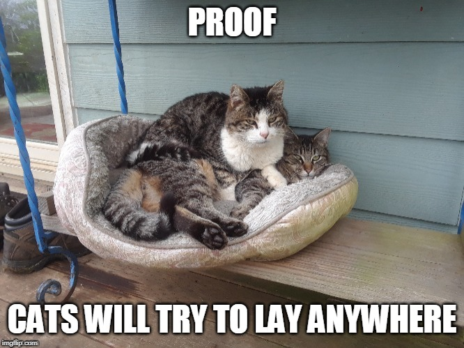 MOVE OVER | PROOF CATS WILL TRY TO LAY ANYWHERE | image tagged in funny cats,cats,cat logic,funny | made w/ Imgflip meme maker