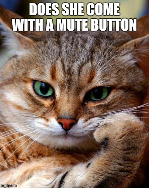 bored cat | DOES SHE COME WITH A MUTE BUTTON | image tagged in bored cat | made w/ Imgflip meme maker