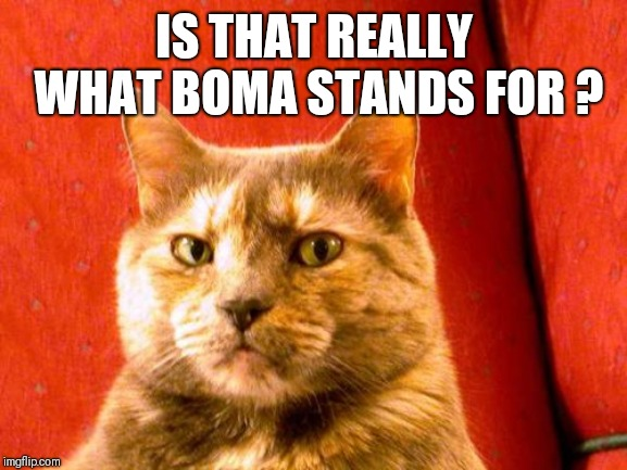 Suspicious Cat Meme | IS THAT REALLY WHAT BOMA STANDS FOR ? | image tagged in memes,suspicious cat | made w/ Imgflip meme maker
