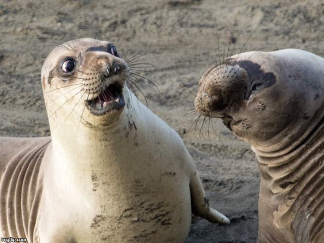 Caption this image in the comment section. | image tagged in caption this,funny animals,seal | made w/ Imgflip meme maker