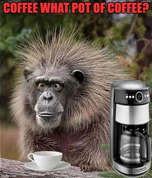 caffeinated | COFFEE WHAT POT OF COFFEE? | image tagged in monkey,coffee | made w/ Imgflip meme maker