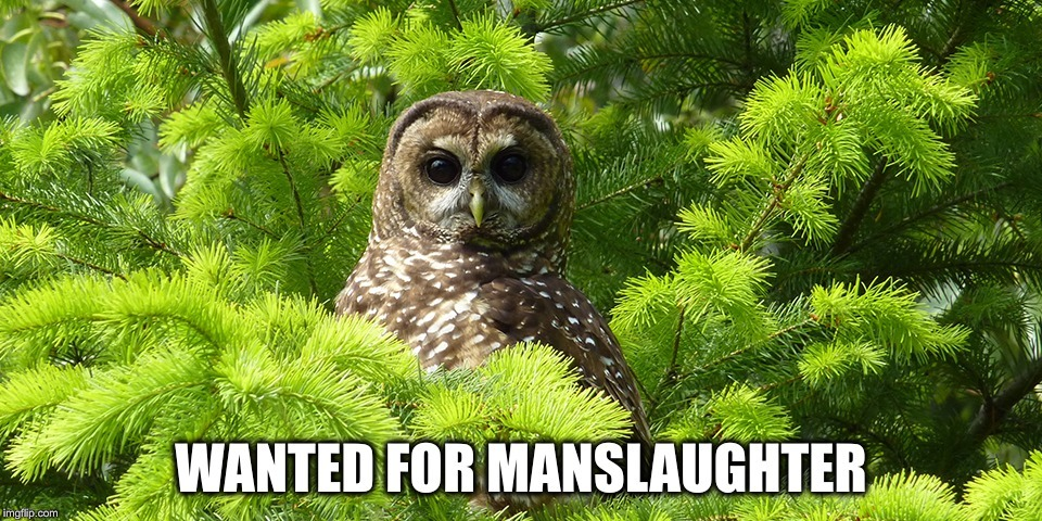 Meanwhile in California... | image tagged in spotted owl,wildfires,forest fire,campfire,tree hugger | made w/ Imgflip meme maker