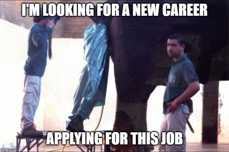 Elephant Butt | I'M LOOKING FOR A NEW CAREER APPLYING FOR THIS JOB | image tagged in now this looks like a job for me,elephant | made w/ Imgflip meme maker