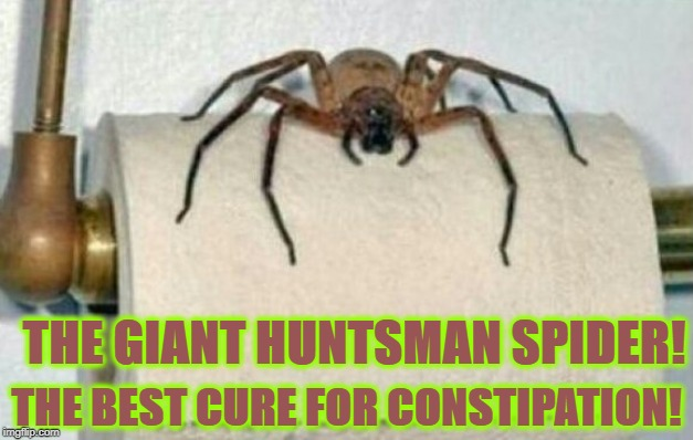 THE GIANT HUNTSMAN SPIDER! THE BEST CURE FOR CONSTIPATION! | image tagged in constipation cure | made w/ Imgflip meme maker