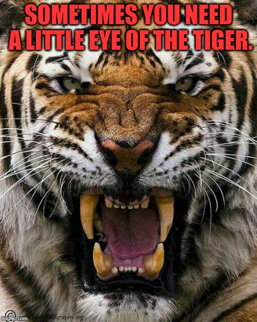 Not all battles are easily won. | SOMETIMES YOU NEED A LITTLE EYE OF THE TIGER. | image tagged in nixieknox,memes,eye of the tiger | made w/ Imgflip meme maker