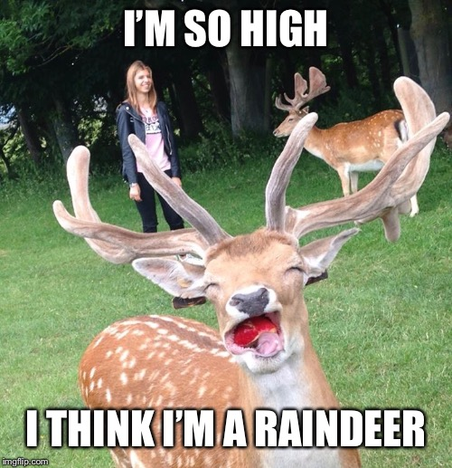 I'M SO HIGH I THINK I'M A RAINDEER | made w/ Imgflip meme maker