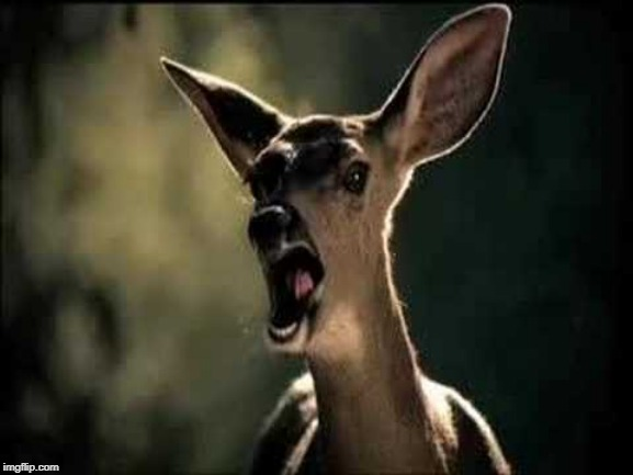 Deer Scream | image tagged in deer scream | made w/ Imgflip meme maker