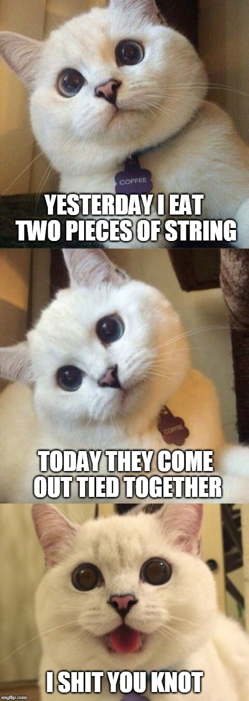 bad pun cat  | YESTERDAY I EAT TWO PIECES OF STRING I SHIT YOU KNOT TODAY THEY COME OUT TIED TOGETHER | image tagged in bad pun cat,strings,eating,cats,shit | made w/ Imgflip meme maker