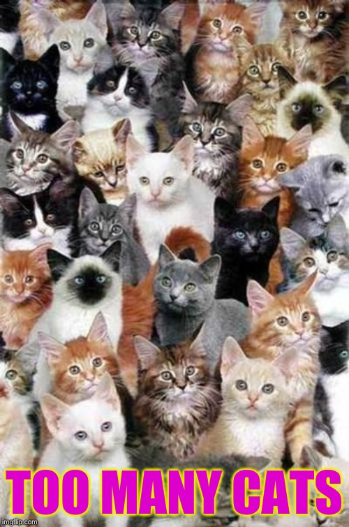 Too Many Cats | TOO MANY CATS | image tagged in too many cats | made w/ Imgflip meme maker